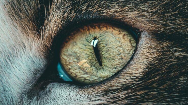 animais podem enxergar no escuro