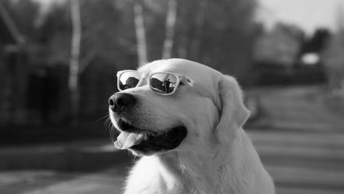 visão dos cachorros